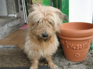 Meu amor canino